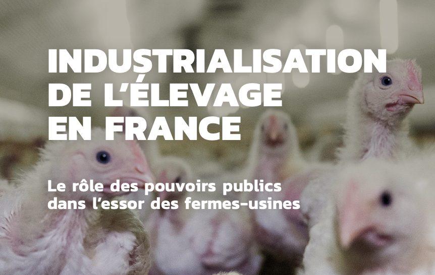 """Greenpeace demande un moratoire sur les """"fermes usines"""" en France"""